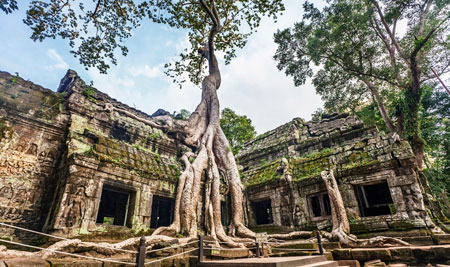 Asian temple being overtaken by a tree