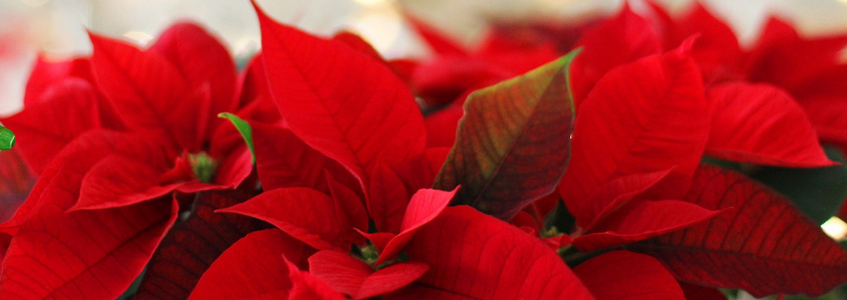Sleigh It: Getting Your Home Holiday Ready